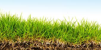 Carolina Vistas Lawn Care Programs
