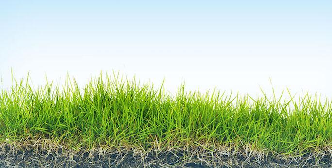 lawn care programs & services